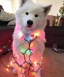 Christmas(^__^)..