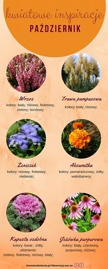 kwiaty dostępne w październiku