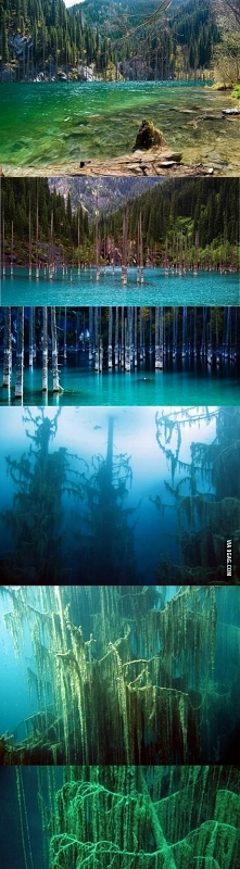 The sunken forest of Lake K...