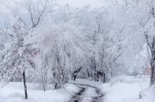 Długi, zimowy, świąteczny rodzinny spacer: -wiele chęci -zero stresu -obowiązkowe czapki i rękawiczki -1 para sanek -1 aparat fotograficzny -1 długa droga, najlepiej przy lesie ...