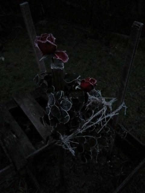 Róża :-)