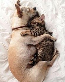 Po prostu pies z kotem. Nie przeszkadzać proszę.