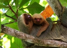 Jeżeli już coś słyszałeś o Kostaryce to prawdopodobnie jedną z dwóch rzeczy: Kostaryka ma okropne drogi oraz wspaniałe parki narodowe. Podczas gdy to pierwsze to kompletna bzdur...