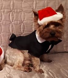 Pomocnik Świętego Mikołaja ;-)