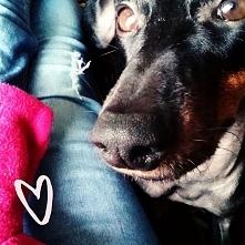 #chillujemy #dogs #manchest...