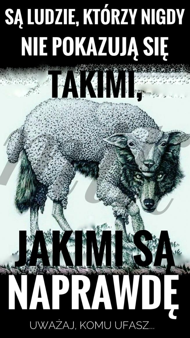 wilk w owczej skórze...