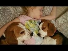 Mała dziewczynka i jej pieski nie chcą wstać z łóżka