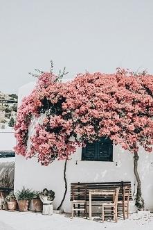Miols, Grecja