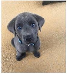 I Love Puppies :)