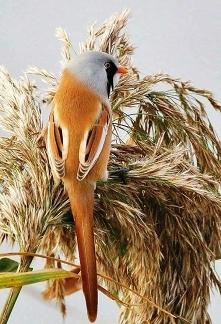 Nice bird (^__^)