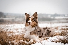 zimowy Vuko