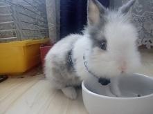 Najkochańsze zwierzątko :)
