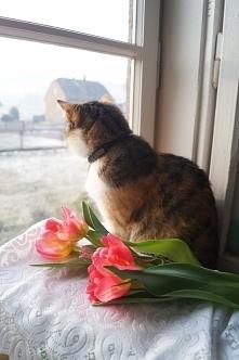 My czekamy na wiosne