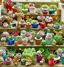 Wow that's beautiful garden♥
