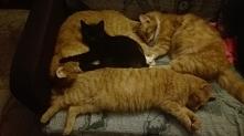 nowa czarna koteczka w rodz...