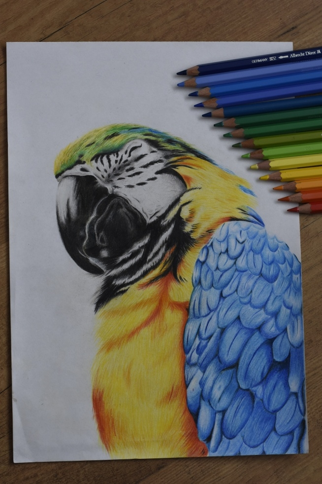 Macaw narysowana kredkami fabercastell.  Instagram: sandi0093