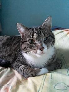 Mój kotek :) Gdy miał 7 tygodni został znaleziony na ruchliwej ulicy i miał k...