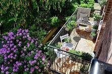 Cudny balkon! Niech wiosna ...