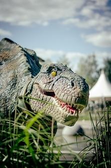 Real T-REX :) Poznaj gościa w Parku Ewolucji w Sławutówku k.Redy