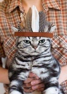 kot - indianin