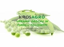 Groszek jest jedną z najpopularniejszych roślin strączkowych. Niepowtarzalny słodki smak i duża wartość zdrowotna warzywa, które jest niezastąpionym składnikiem sałatek, sprawił...