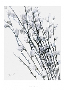 Bazie print |50x70 cm