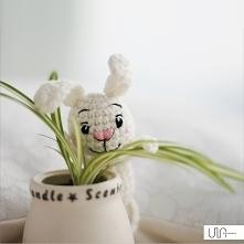 królik łobuz