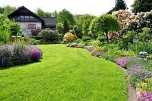 Jak założyć trawnik w ogródku? Podstawy dla początkującego ogrodnika