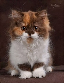 Ten kot jest bardzo słodki...