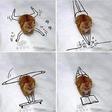Leniwy kotek