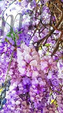 Jesteśmy jak te piękne kwia...