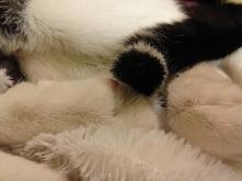 instrukcja obsługi człowieka z punktu widzenia kota :D (klik)