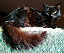 Kot z kosą na ogonie ;) FurryFuria