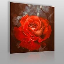 Krwista róża w kwadracie - ...