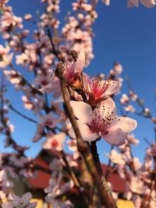 Wiosno ... Trwaj !<3