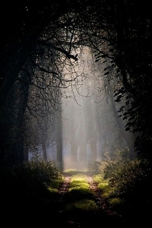 Leśna droga...