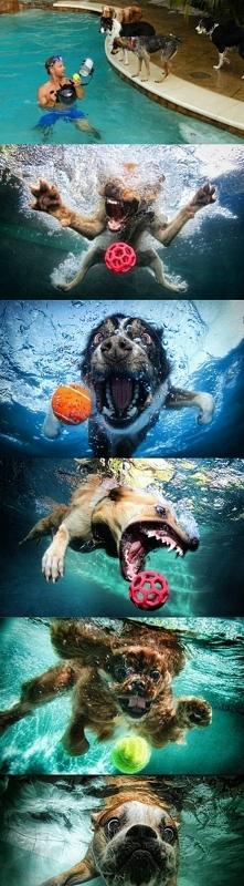 Psiaki na basenie ;)