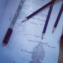 Nauka anatomi... Fun! Fun! ...