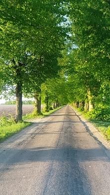 Wiosenny zielony tunel