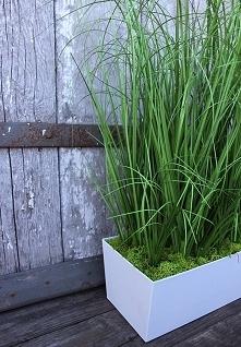 sztuczne trawy ze sklepu tenDOM
