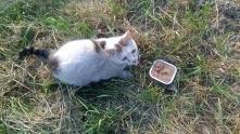 Stawiamy na Łapy   Ogłoszenie grzecznosciowe - Kraków  04/05/2018 w okolicy AWF znaleziono małego białego kotka z niebieskimi oczami. Kotek jest bardzo łagodny, nie boi się psów...