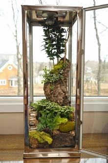 piękne terarium dla roślinek..