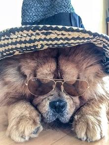 Jestem już gotowy, kiedy jedziemy na plażę?