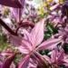 wiosna, wiosna   (więcej po kliknięciu w zdjęcie)