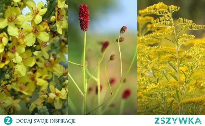 3 polne rośliny, które pomogą na wypryski, trądzik i inne problemy ze skórą