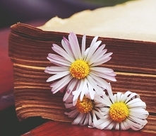 book,daisys