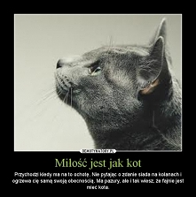 Bo, fajnie jest mieć kota. :-) Moja miłość, niedługo kończy 12 lat. I troszkę z tego powodu robi się smutno :-(