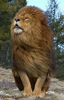 Nie każdy człowiek może być lwem w swoim umyśle♠