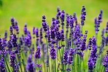 Projektowanie pachnącego ogrodu - sprawdź, jak najprościej się za to zabrać!