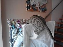 nowy post z kociego punktu widzenia :) Opowiada kot, oczywiście z humorem :) (klik)
